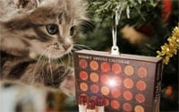 Whisky Advent Calendar Cat